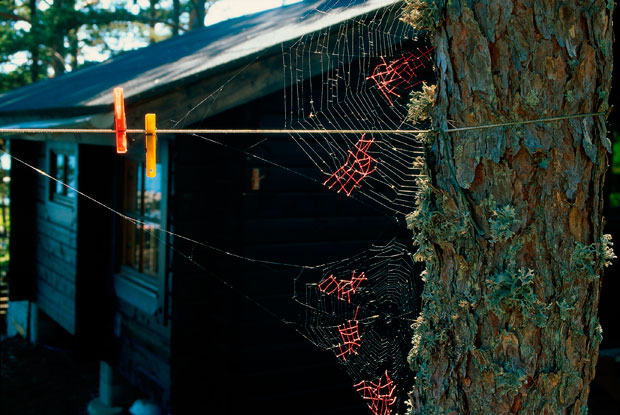 Mended-Spiderweb-19