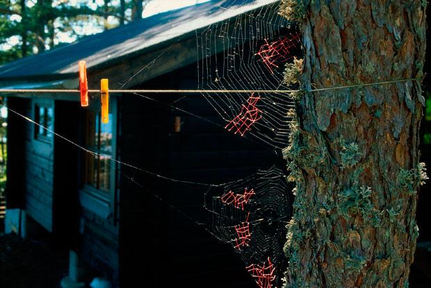 Mended-Spiderweb-19